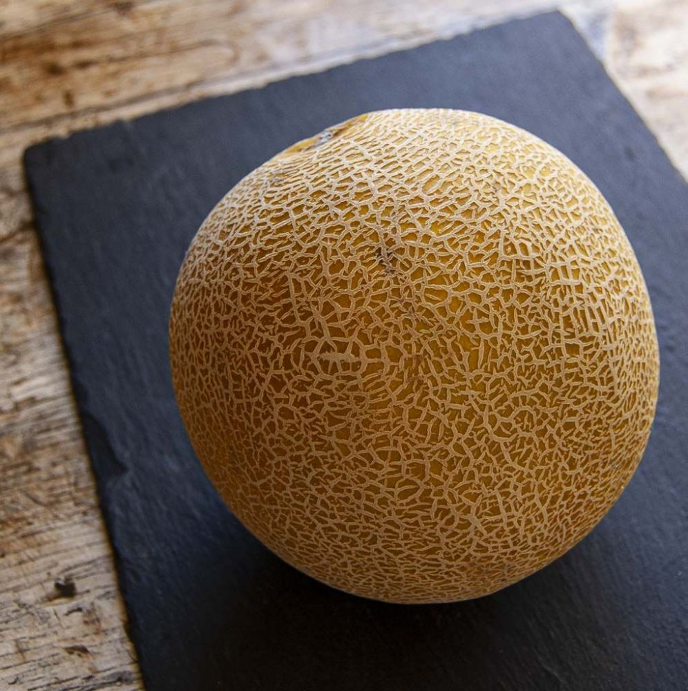 Galia Melon (Each)